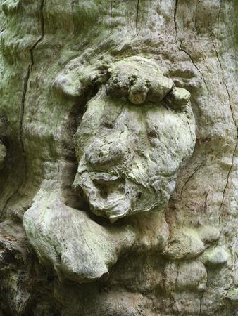https://imgc.artprintimages.com/img/print/forest-spirit-tree-face-in-old-beech-urwald-sababurg-reinhardswald-hessia-germany_u-l-q1ey1dj0.jpg?p=0