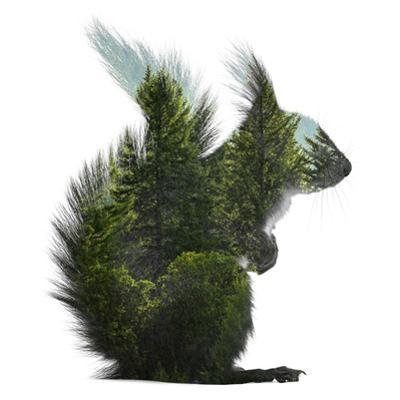 Forest - Squirrel - Silhouette