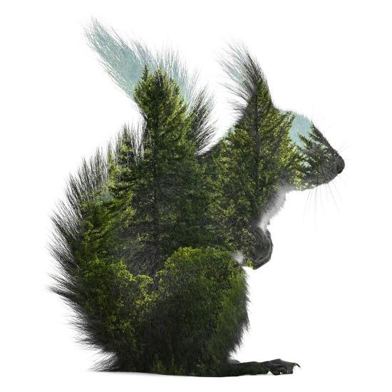 Forest - Squirrel - Silhouette--Photographic Print