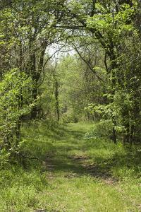 Forest Trail on Chickasaw Bluff near the Mississippi River, Tennessee