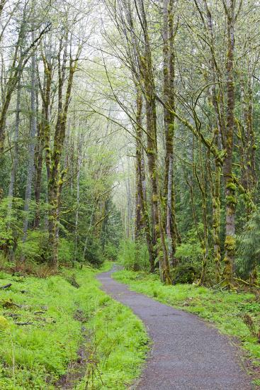 Forest Trail, Tiger Mountain State Forest, Washington, USA-Jamie & Judy Wild-Photographic Print