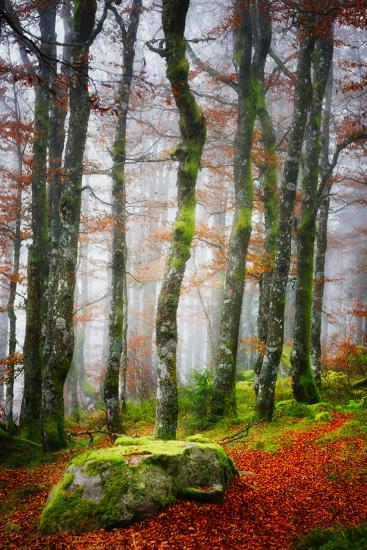 Forest Trail-Philippe Sainte-Laudy-Photographic Print