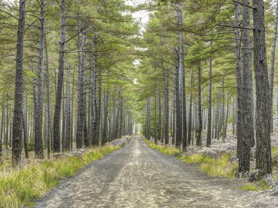 Forest Trails-Assaf Frank-Giclee Print