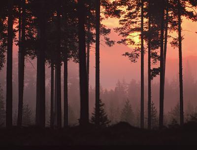Forest Twilight-Peter Lilja-Giclee Print