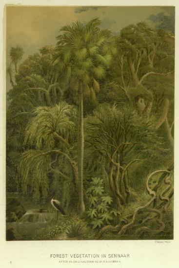 Forest Vegetation in Sennaar--Giclee Print