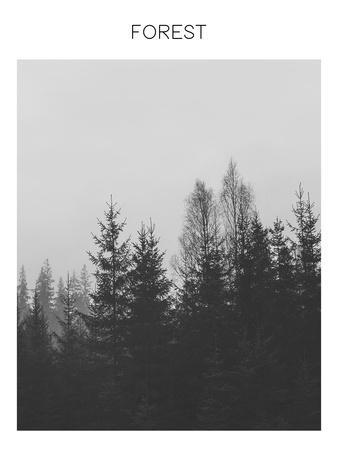 https://imgc.artprintimages.com/img/print/forest_u-l-f9hpgl0.jpg?p=0