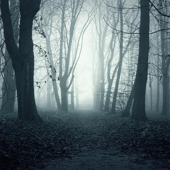 Forest-Mark Ashkenazi-Giclee Print