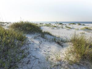 Detailed Wide Angle Shot of Pristine White Sand Dunes and Native Shoreline Plants in Pensacola Flor by forestpath
