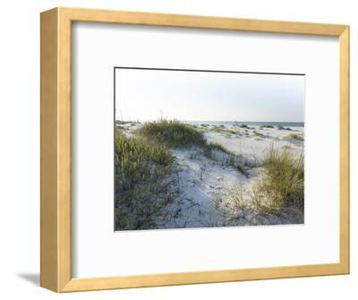 Detailed Wide Angle Shot of Pristine White Sand Dunes and Native Shoreline Plants in Pensacola Flor