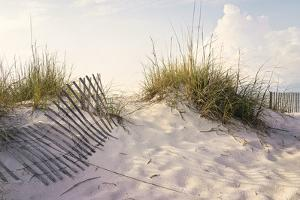Peaceful Morning in the Beach Sand Dunes by forestpath