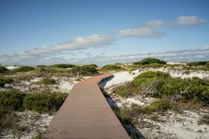 Sand Dunes Boardwalk by forestpath