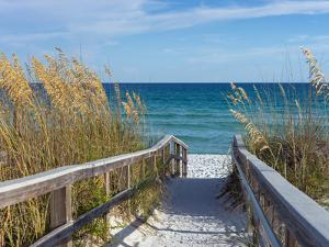 Sandy Boardwalk Path to a Snow White Beach on the Gulf of Mexico with Ripe Sea Oats in the Dunes by forestpath