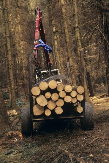 Forestry-David Aubrey-Photographic Print
