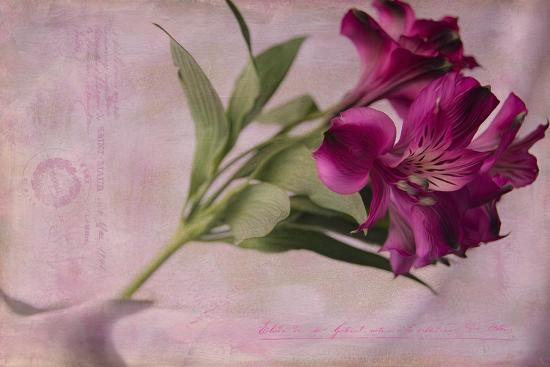 Forever Fuchsia-Bob Rouse-Giclee Print