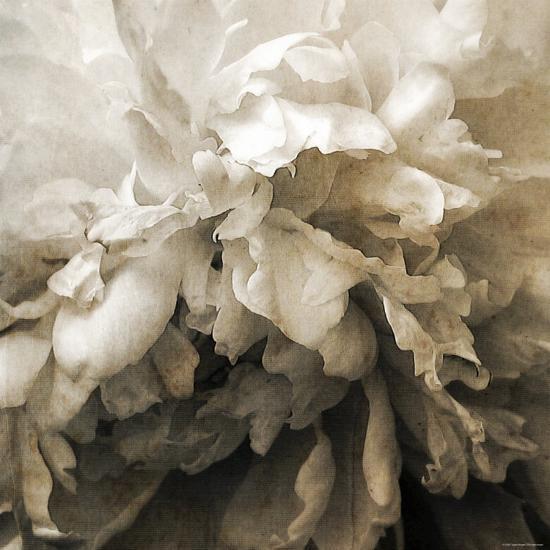 Forget-Katherine Sanderson-Photographic Print