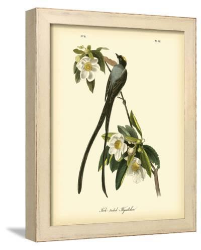 Fork-Tailed Flycatcher-John James Audubon-Framed Art Print