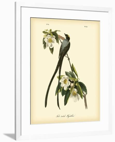 Fork-Tailed Flycatcher-John James Audubon-Framed Premium Giclee Print