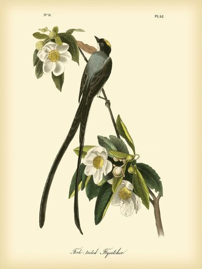 Fork-Tailed Flycatcher-John James Audubon-Art Print