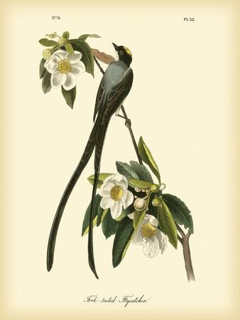 https://imgc.artprintimages.com/img/print/fork-tailed-flycatcher_u-l-pfr48k0.jpg?p=0