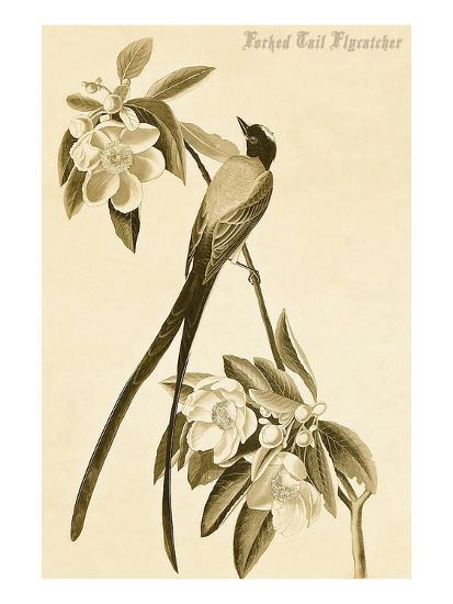 Forked Tail Flycatcher-John James Audubon-Art Print