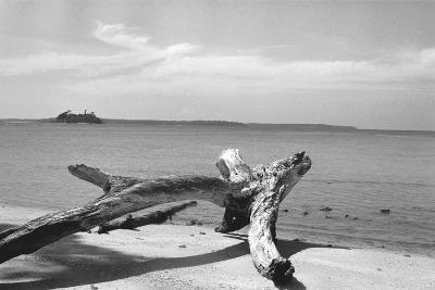 Form of Tree Trunk at Beach--Photographic Print