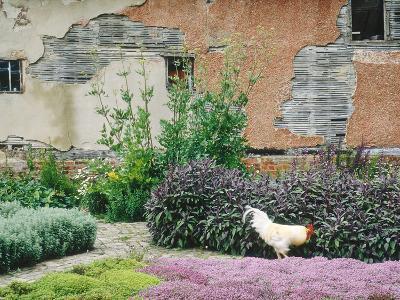 Formal Herb Garden Thyme-Jacqui Hurst-Photographic Print