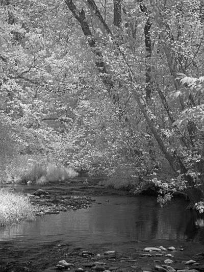 Forrest-J.D. Mcfarlan-Photographic Print