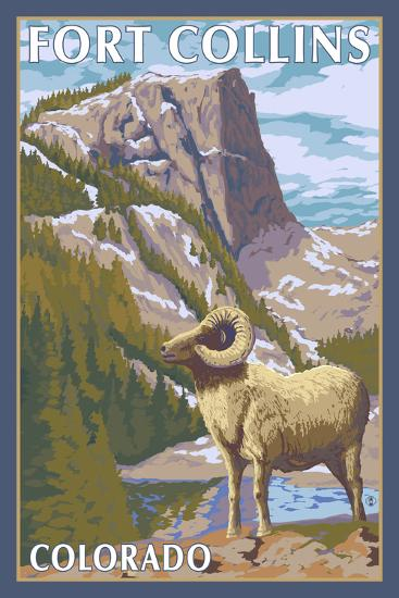 Fort Collins, Colorado - Big Horn Sheep-Lantern Press-Art Print