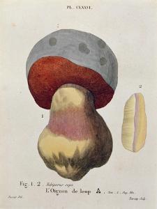 Tubiporus Cepa, Plate 176 from 'Iconographie Des Champignons De J.J. Paulet' by J. H. Leveille by Fossier