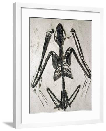Fossil Bat-Jeff Foott-Framed Photographic Print