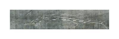 Fossil Imprint I-John Butler-Art Print