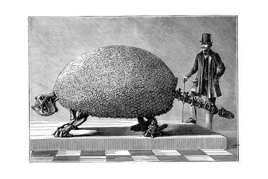 Fossil of a Giant Armadillo from South America, C1890--Giclee Print