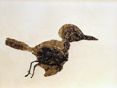 Fossil of Small Bird from Messel Site-Jonathan Blair-Photographic Print