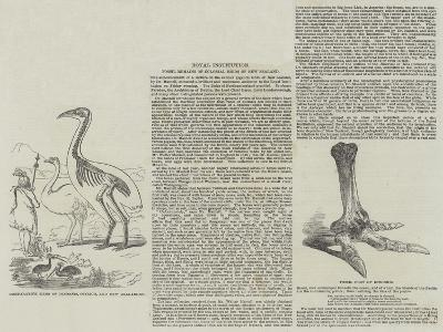 Fossil Remains of Colossal Birds of New Zealand--Giclee Print