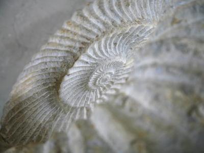 Fossil Shells I-Nicole Katano-Photo
