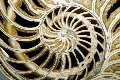 Fossilized Nautilus Shell, Nautilus Striatus-Sinclair Stammers-Photographic Print