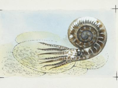 Fossils, Ammonite, Illustration--Photographic Print