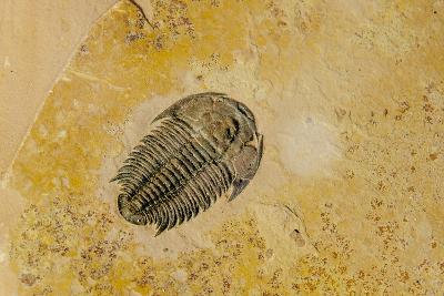 Fossils at Dinosaur Discovery, Johnson Farm, St. George, Utah-Michael DeFreitas-Photographic Print