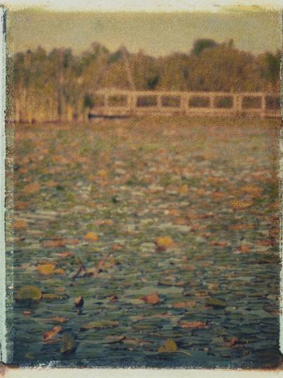 Foster Island Lily Pads-Jennifer Kennard-Photographic Print
