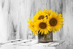 Background Still Life Flower Sunflower Wooden White Vintage by FOTOALOJA