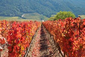 Wine Route - Colchagua Valley (Chile) by Fotografas Jorge Le³n Cabello