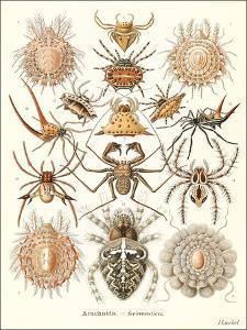 Arachnids by Found Image Press