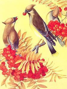 Cedar Waxwings by Found Image Press