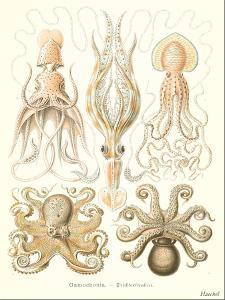 Cephalopods by Found Image Press