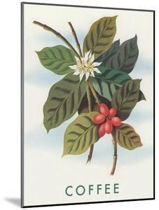 Coffee Plant by Found Image Press