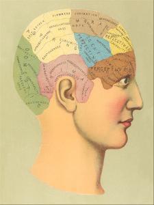 Phrenology Chart by Found Image Press