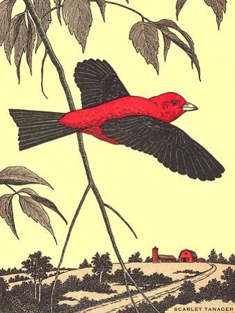 Scarlet Tanager by Found Image Press