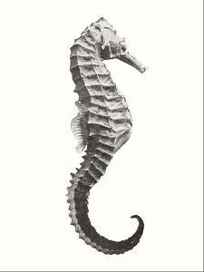Seahorse by Found Image Press