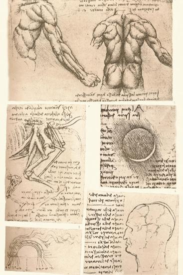 Four anatomical drawings, c1472-c1519 (1883)-Leonardo da Vinci-Giclee Print