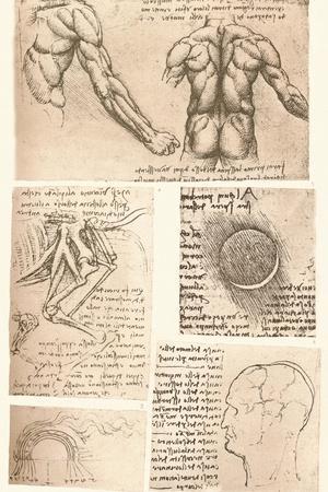 https://imgc.artprintimages.com/img/print/four-anatomical-drawings-c1472-c1519-1883_u-l-q1edmrv0.jpg?p=0